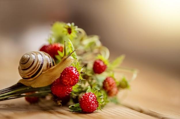 Pequeno caracol rasteja no buquê de morango selvagem com frutas vermelhas maduras. fundo de luz solar Foto Premium
