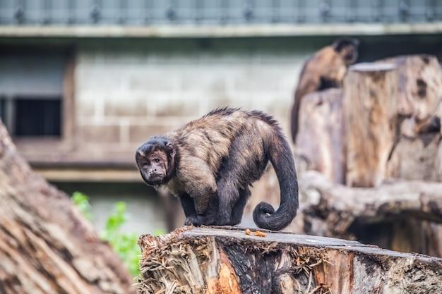 Pequeno, macaco, ao ar livre, parque, novo, zelândia Foto gratuita