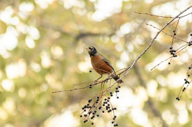 Pequeno pássaro marrom em um galho de árvore Foto gratuita