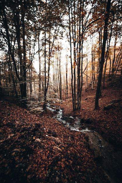 Pequeno rio na floresta Foto Premium
