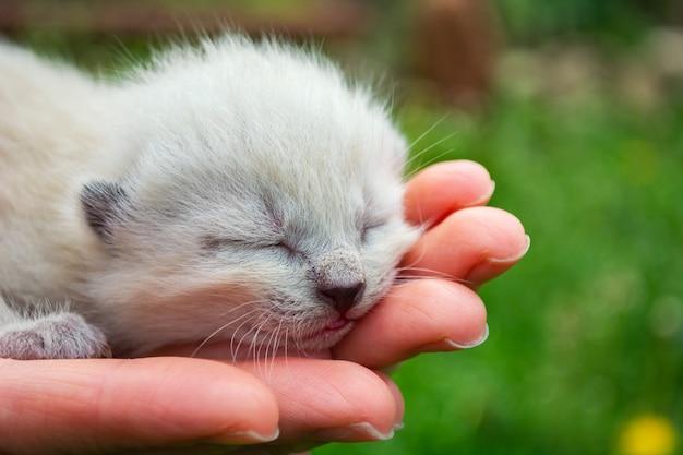 Pequenos, recém nascidos, gatinhos cegos nas palmas Foto Premium
