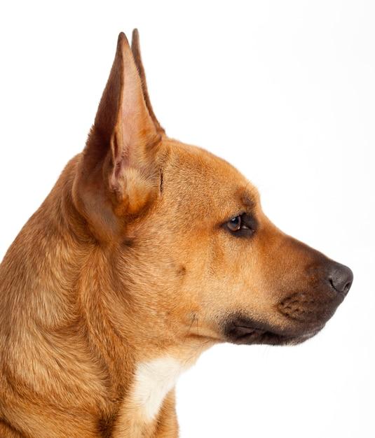 Perfil da cabeça de um cachorro marrom Foto Premium