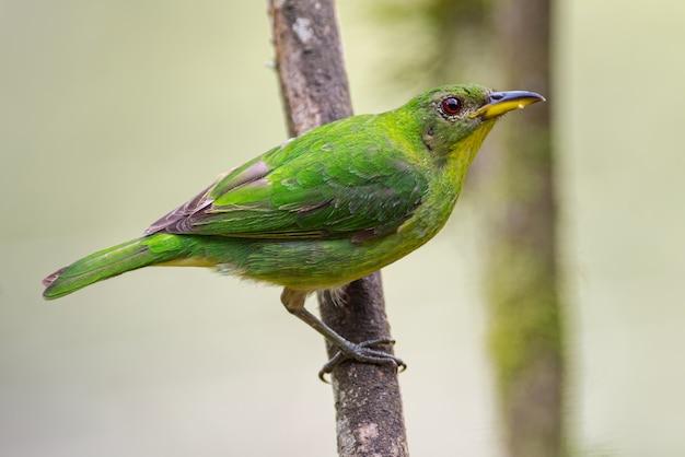 Perfil de uma trepadeira verde de uma árvore Foto Premium