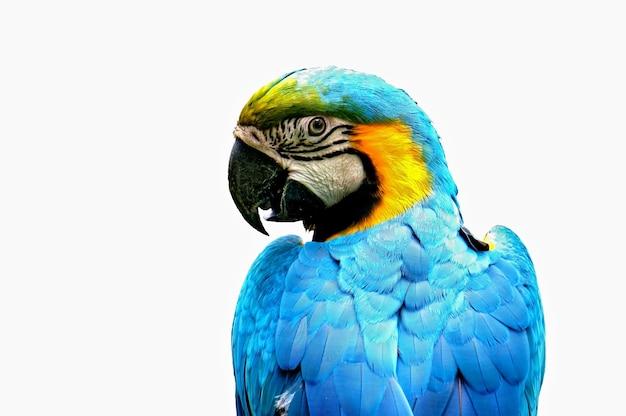 Perfil do papagaio Foto gratuita