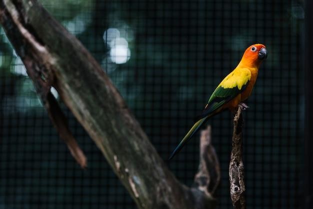 Periquito colorido em um galho de árvore Foto gratuita
