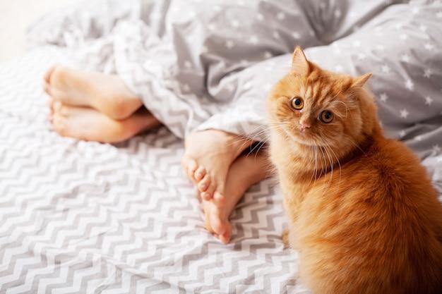 Pernas de amantes sob o cobertor e gato vermelho sentar na cama Foto Premium