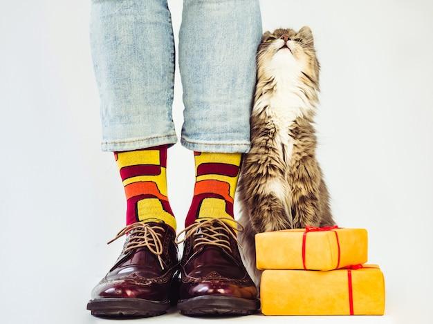 Pernas masculinas, sapatos estilosos, meias coloridas com estampa e um gatinho cinza fofinho. Foto Premium