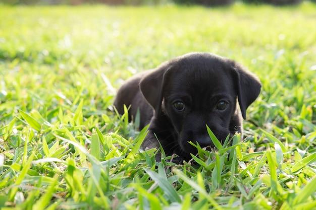 Persiga a vista acima de querer alguém jogar com ele ou a espera do alimento. Foto Premium
