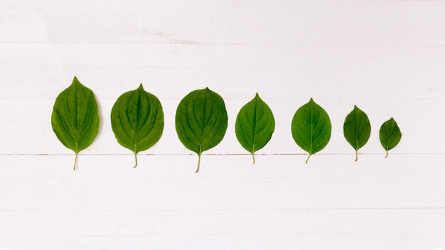 Perspectiva da floresta feita de folhas Foto gratuita