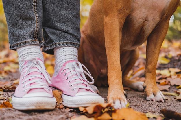 Pés de humanos e cães entre folhas de outono. foto de close-up de tênis e pernas do cão lado a lado, o conceito de companhia, vínculo entre pessoa e animal de estimação Foto Premium