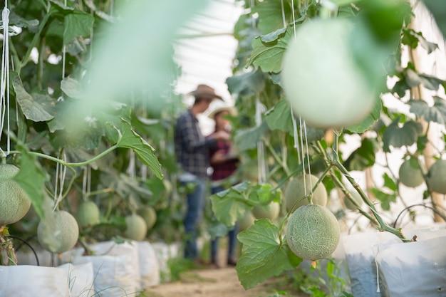 Pesquisador agrícola com o tablet lentamente inspeciona plantas. Foto gratuita