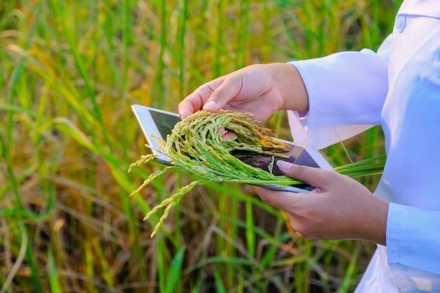 Pesquisador de mulheres asiáticas está monitorando a qualidade do arroz na fazenda Foto Premium