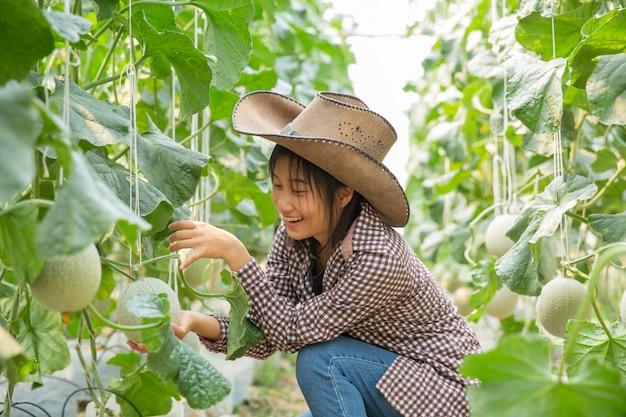 Pesquisadores de plantas estão investigando o crescimento do melão. Foto gratuita