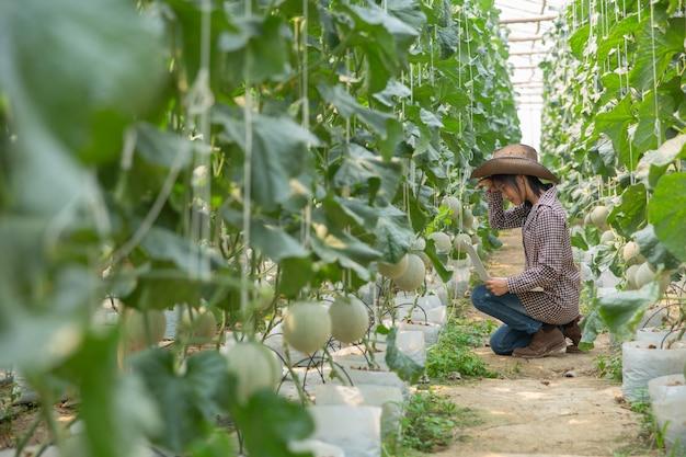 Pesquisadores de plantas estão verificando os efeitos do melão. Foto gratuita