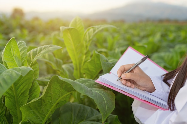 Pesquisadores do sexo feminino examinaram folhas de tabaco Foto gratuita