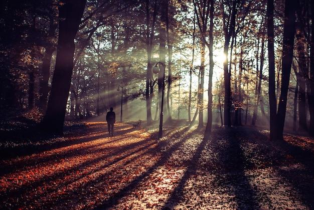 Pessoa caminhando em um belo caminho coberto com folhas outonais Foto gratuita