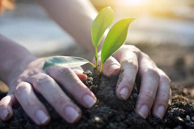 Pessoas que cultivam árvores, rega de plantas e plantio de árvores Foto Premium