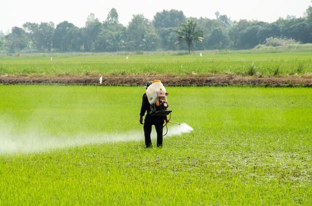 Pesticidas do arroz Foto Premium