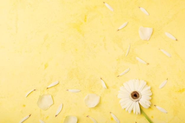 Pétalas brancas com fundo de espaço amarelo cópia Foto gratuita