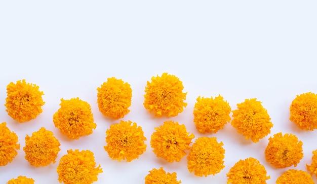 Pétalas de flores de calêndula em branco Foto Premium