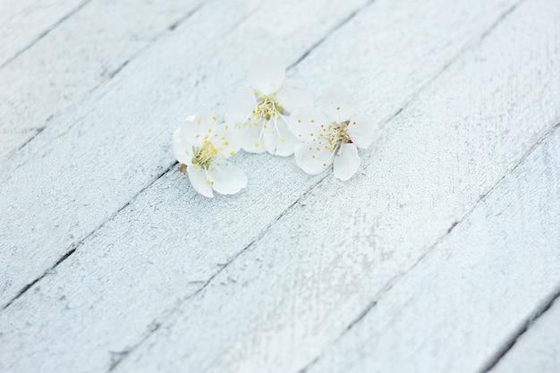Pétalas de flores de cerejeira sobre um fundo claro de madeira, fundo de primavera Foto Premium