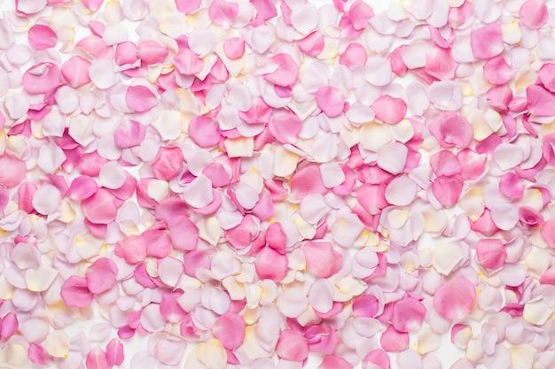 Pétalas de flores rosa pastel em branco. Foto Premium