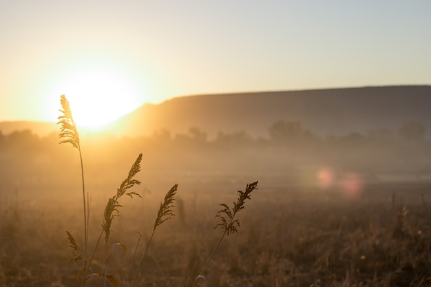 Picos ao amanhecer Foto Premium