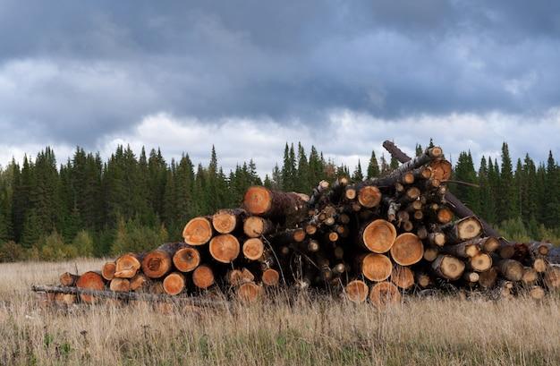 Pilha de árvores abatidas na grama seca da floresta conífera verde e do céu nublado. Foto Premium