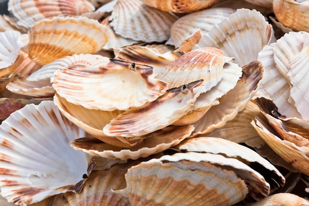 Pilha de conchas de vieira como textura de fundo Foto Premium