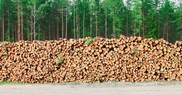 Pilha de lenha de troncos de pinheiro recém-picados Foto Premium