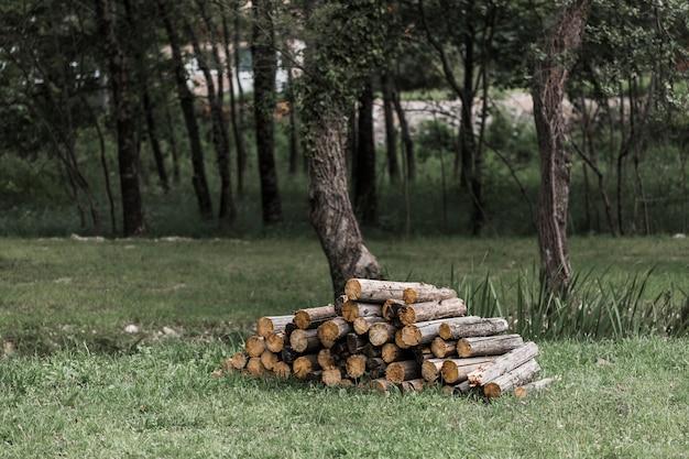 Pilha de log na floresta Foto gratuita