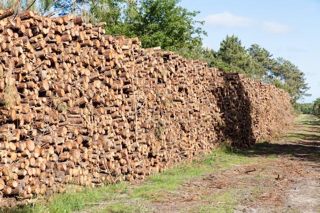 Pilha de troncos de pinheiro corta Foto Premium