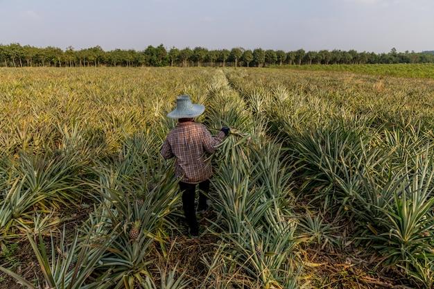 Pineapple está localizado na pranburi prachuapkirikhan province Foto Premium