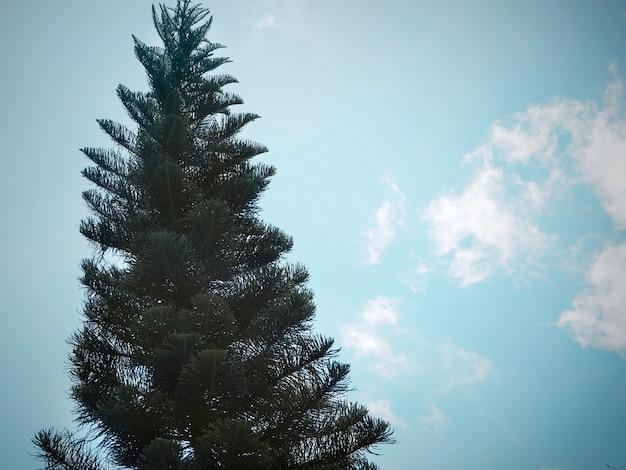 Pinheiro com fundo de céu azul Foto gratuita