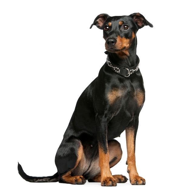 conheça melhor esse cão