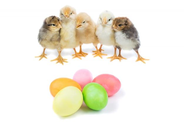 Pintinho da páscoa e ovos pintados Foto Premium