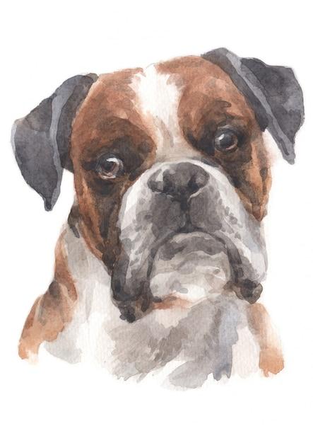 Pintura a aguarela de boxer Foto Premium