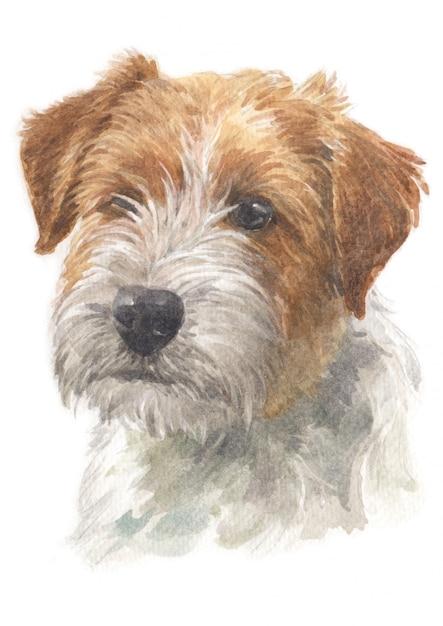 Pintura a aguarela de jack russell terrier Foto Premium