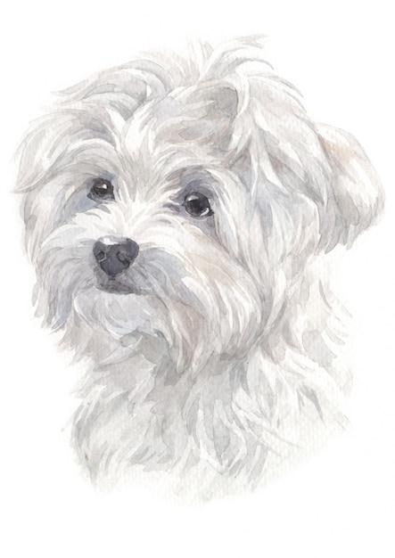 Pintura a aquarela de maltês cães de caça