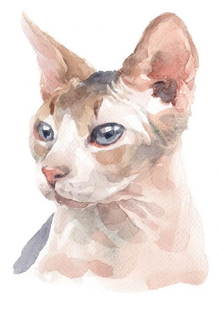 Pintura a cores de água de sphynx cat Foto Premium