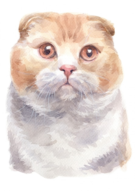 Pintura a óleo da cor do scottish shorthair cat Foto Premium