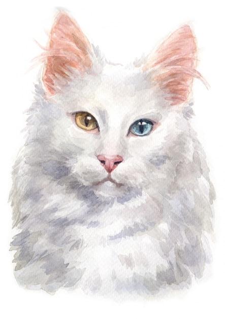 Pintura da cor de água do gato angorá turco Foto Premium
