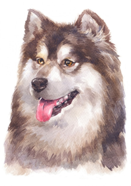 Pintura de cor de água de malamute do alasca Foto Premium