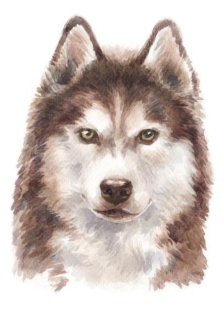 Pintura em aquarela, cão de pêlo comprido husky siberiano Foto Premium