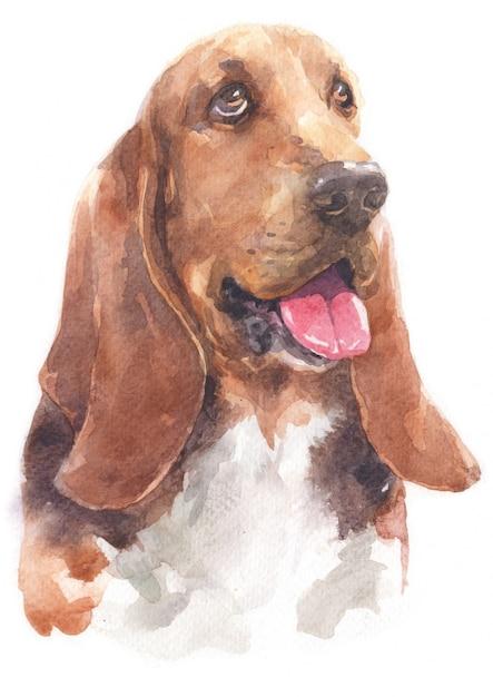 Pintura em aquarela de basset hound Foto Premium