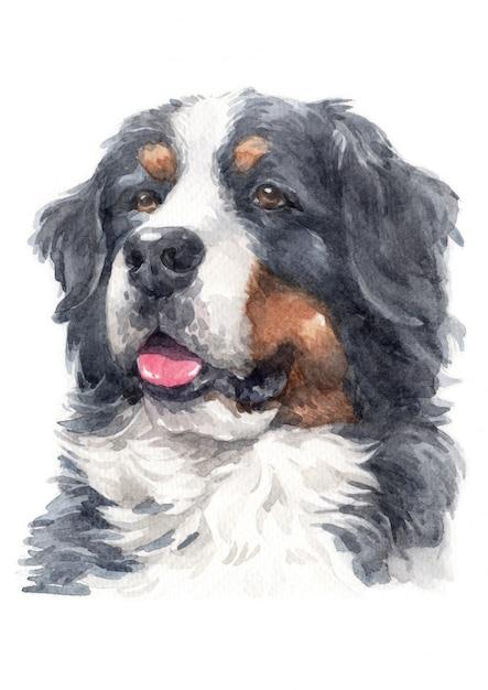 Pintura em aquarela de bernese mountain dog Foto Premium