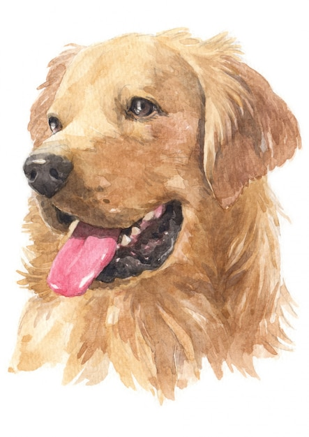 Pintura em aquarela de golden retriever Foto Premium