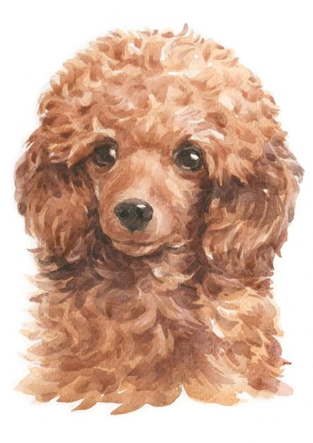 Pintura em aquarela de poodle Foto Premium