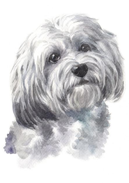 Pintura em aquarela de raça de cachorro havaneses Foto Premium