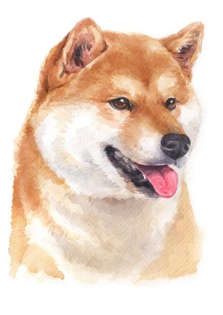 Pintura em aquarela de shiba inu Foto Premium